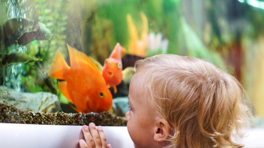 Where To Buy Your First Pet Fish?